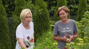 Kwiatowy ogród z winnicą (odc. 690 /HGTV odc. 28 seria 2018)